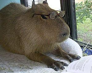 [Image: capybara.jpg]